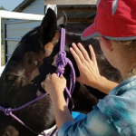 Horse therapy_Massage